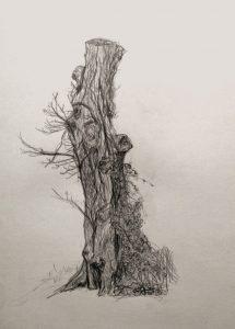 observation-arbre